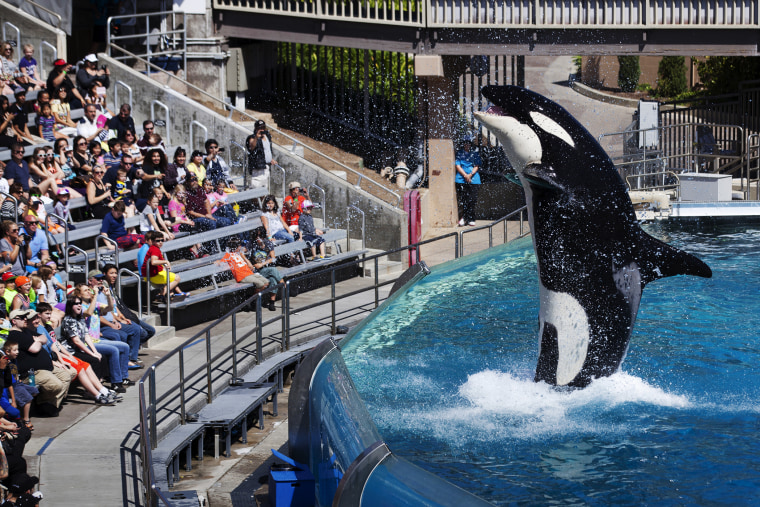 Visitors are greeted by an Orca killer whale as they attend a show featuring the whales during a visit to the animal theme park SeaWorld in San Diego, Calif. in this March 19, 2014 file photo. (Photo by Mike Blake/Reuters/Corbis)