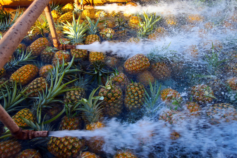 Freshly picked pineapples are thoroughly washed at the processing plant in Wahiawa, Hawaii, Jan. 17, 2013. (Photo by Tim Rue/Bloomberg/Getty)