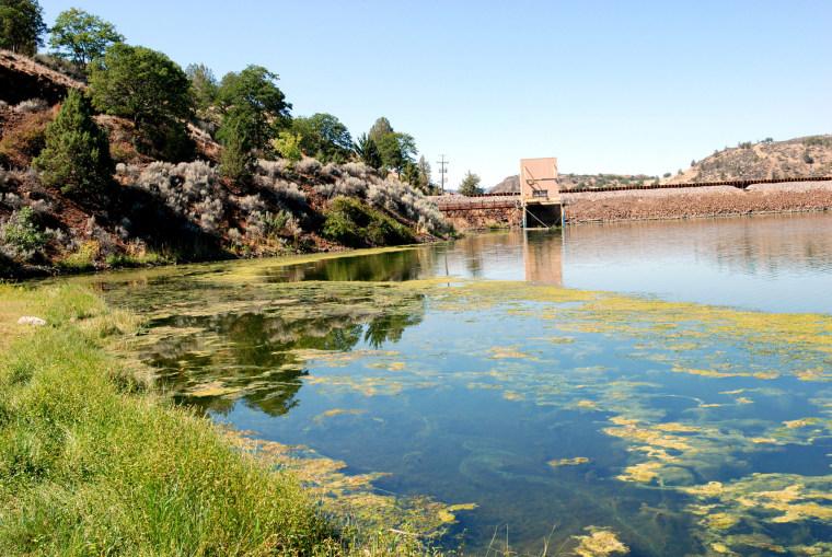 An algae bloom in the reservoir behind Iron Gate Dam on the Klamath River near Hornbrook, Calif., Aug. 31, 2009. (Photo by Jeff Barnard/AP)