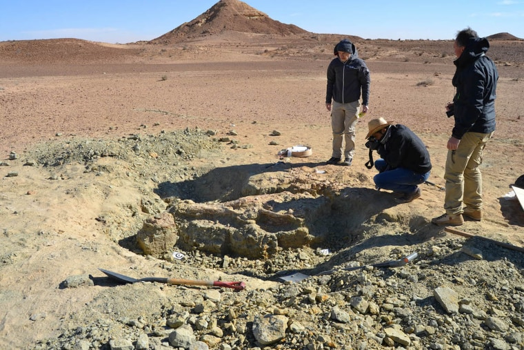 The excavation site of the first specimen of the new crocodile-like species, Machimosaurus rex. These fossils were found in the Tataouine region of southern Tunisia, on the edge of the Sahara Desert.