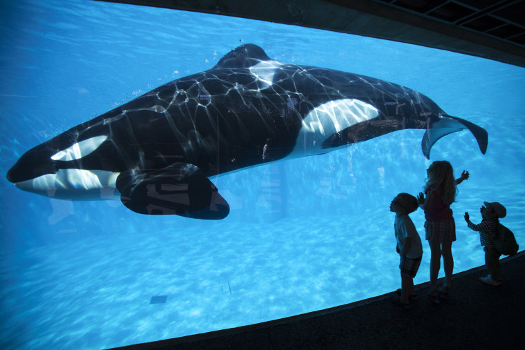 Young children get a close-up view of an Orca killer whale during a visit to the animal theme park SeaWorld in San Diego, Calif., March 19, 2014. (Photo by Mike Blake/Reuters)