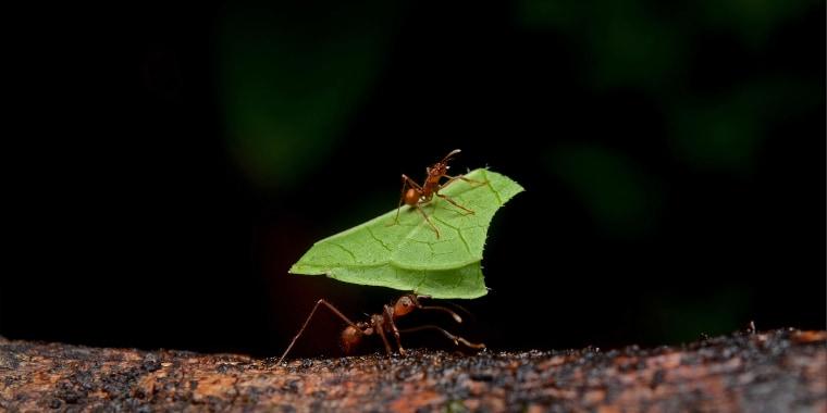 Formicidae seen at La Selva Biological Station, Heredia, Costa Rica