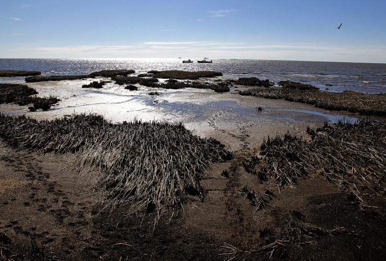 Oil is seen deposited along dead marsh land near Bay Jimmy on Jan. 7, 2011 in Port Sulphur, La. (Photo by Sean Gardner/Getty)