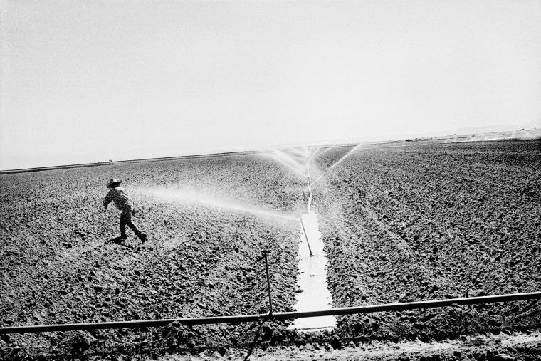 Watering a tomato field in Huron, California. (Photo by Matt Black)