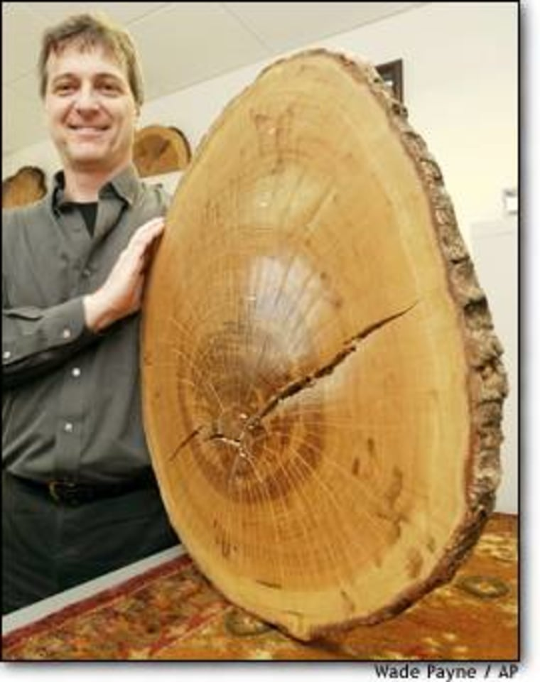 Henri Grissino-Mayer, a tree-ring expert at the University of Tennessee, displays a sample from what was believed to be the oldest white oak tree in Tennessee, dating to 1763.
