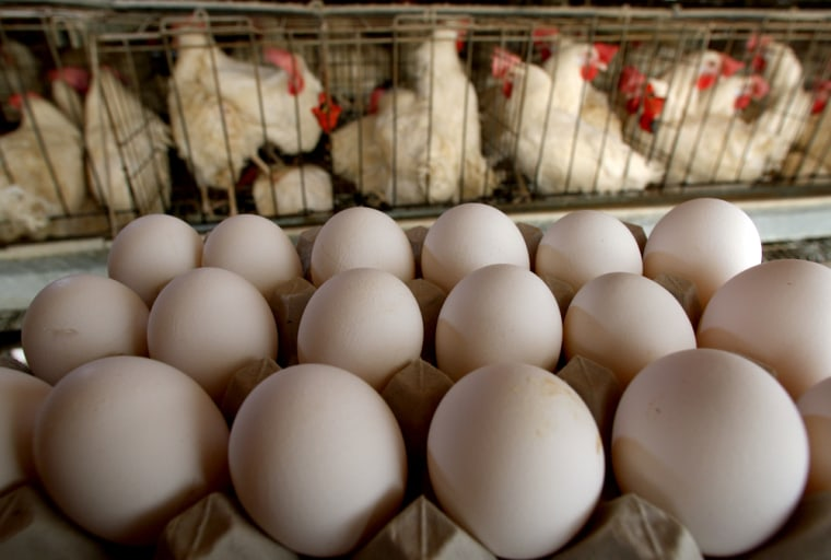 Image:  Freshly-laid eggs are collected for delivery
