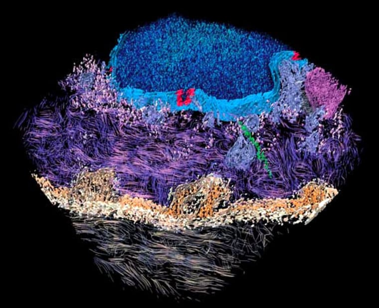 Image: skin cells