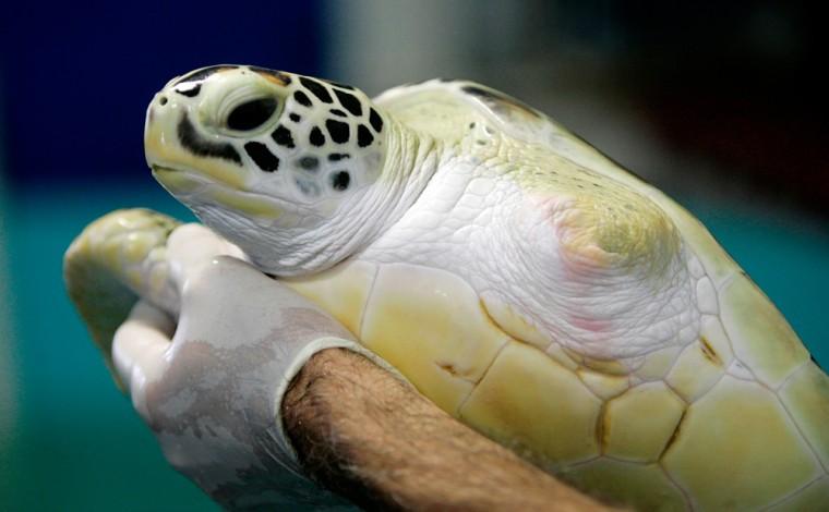 Image: Green sea turtle