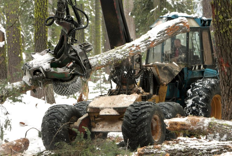 Ralph Strang trims a tree of its branches during a forest thinning project near Tahoe City, Calif., on Dec. 12.