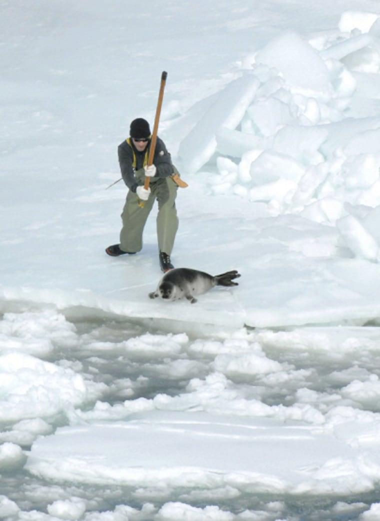 Image: Seal hunter