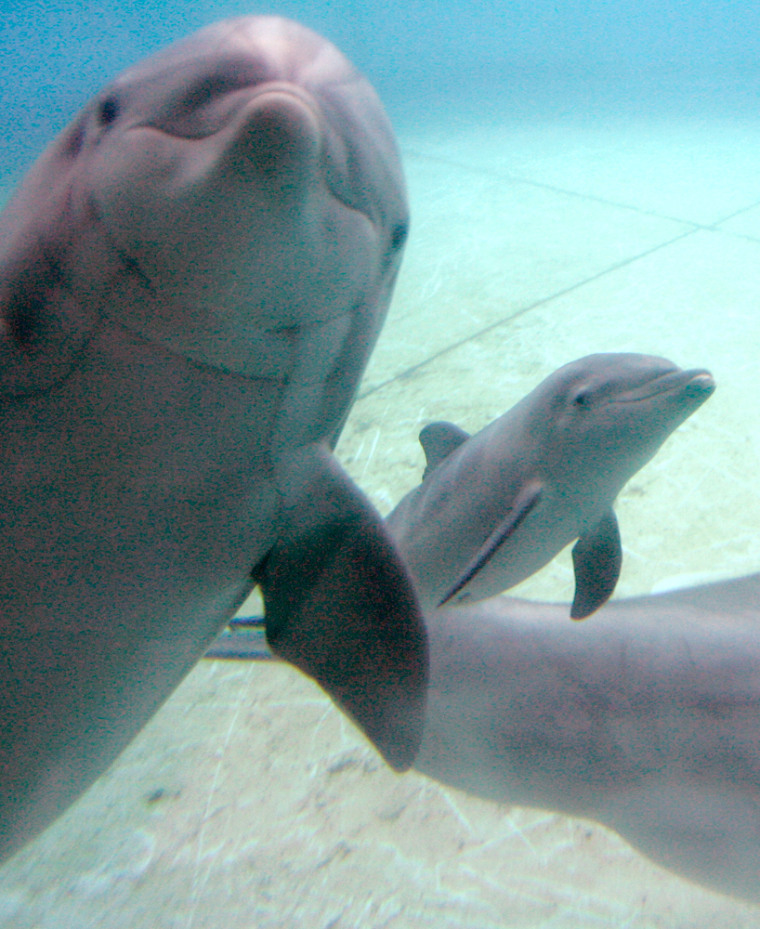 Image: Dolphin swims with baby calf