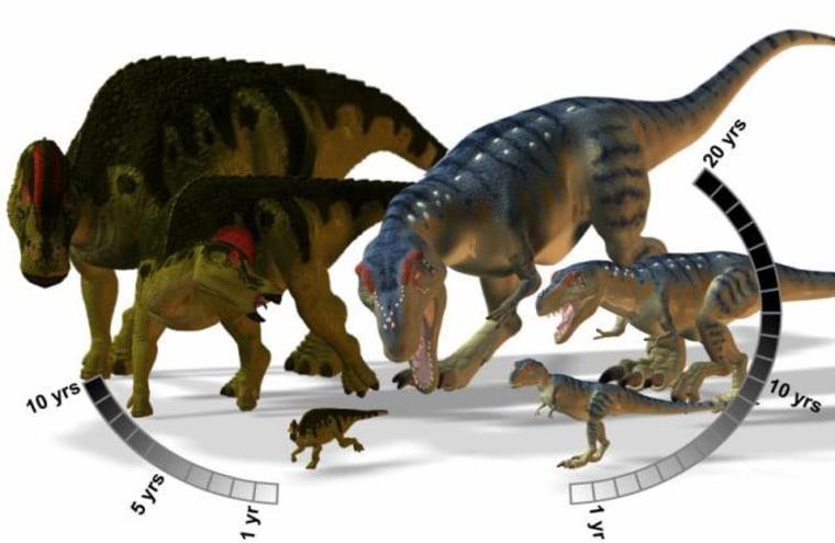 Image: Hypacrosaurus, T-rex graphic
