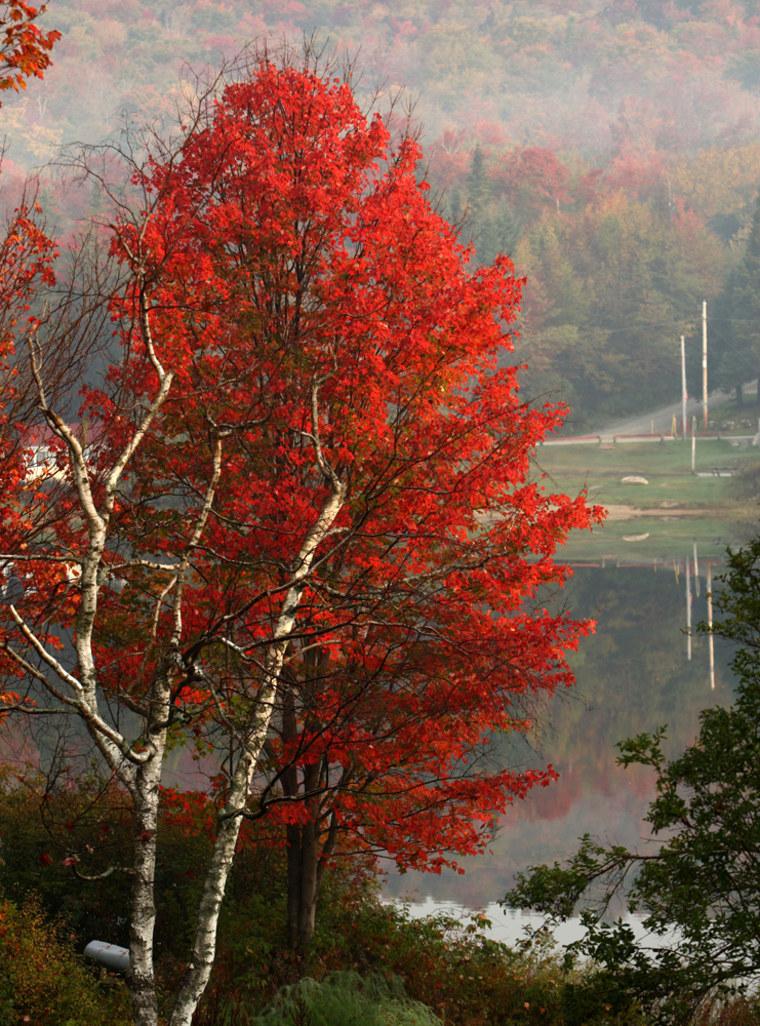 Image: Fall foliage