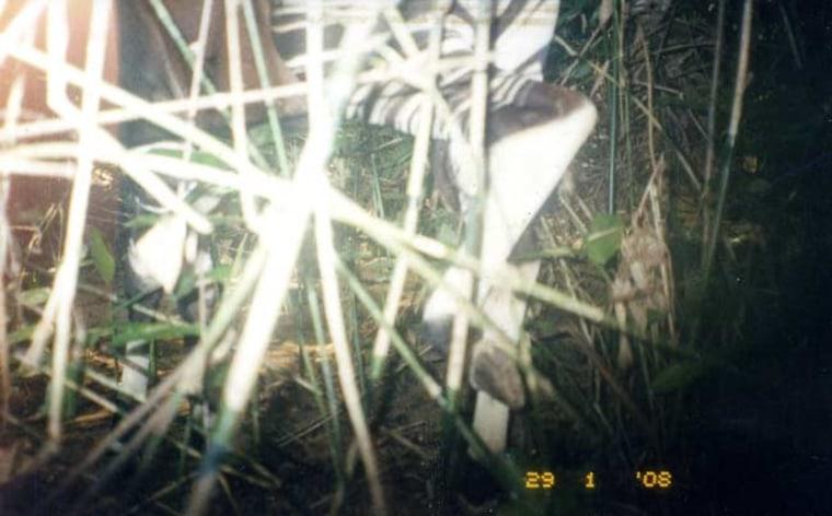 Image: Okapi legs