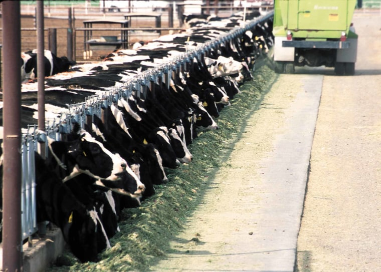 Farms where livestock are concentrated have become a battleground over how much pollution control they should be subject to.