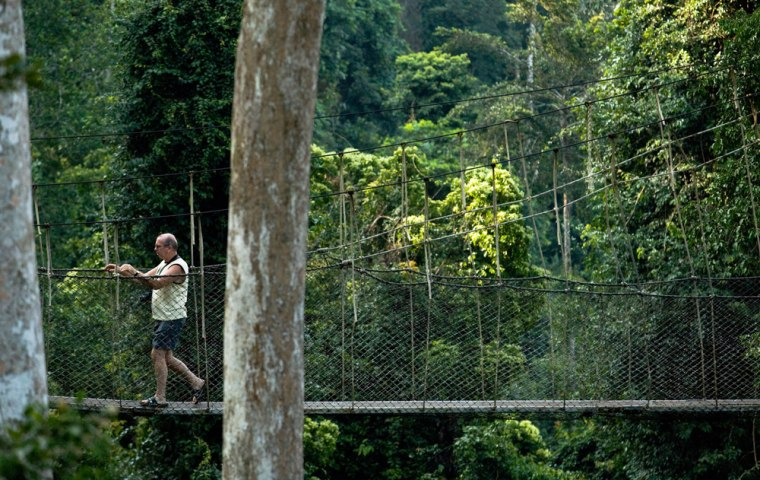 Image:A visitor walks along the canopy walk