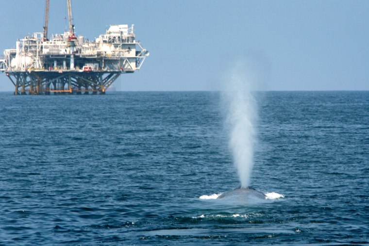 Image: Endangered Blue Whales