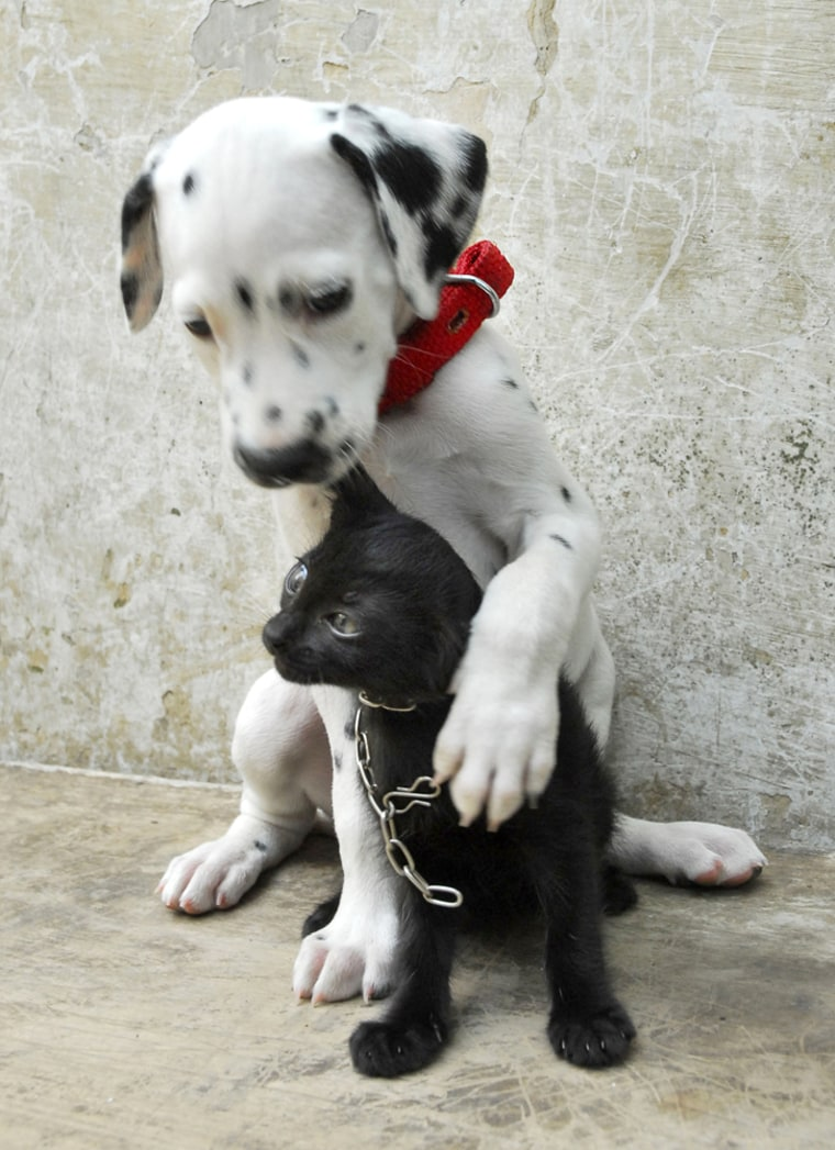 Image: Dog and cat