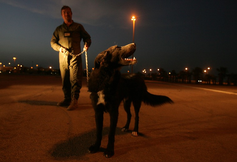 Mike Bell, a member of a private security firm, leads the Iraqi dog called Ratchet, at the Baghdad International Airport, Iraq, on Sunday.