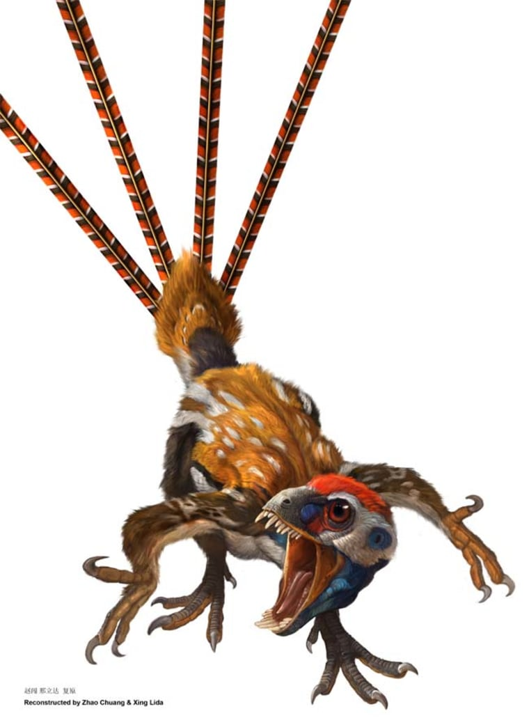 Epidexipteryx, a new feathered dinosaur from the Jurassic Period, likely used its long tail feathers for display and possibly to help with balance while creeping along tree branches. Credit: Zhao Chuang & Xing Lida.