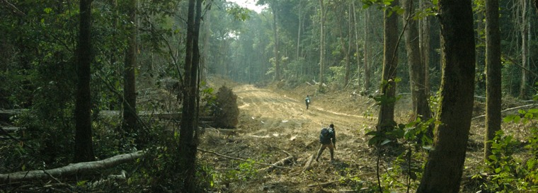New roads in Central Africa like this one are making life harder for elephants, a study found.