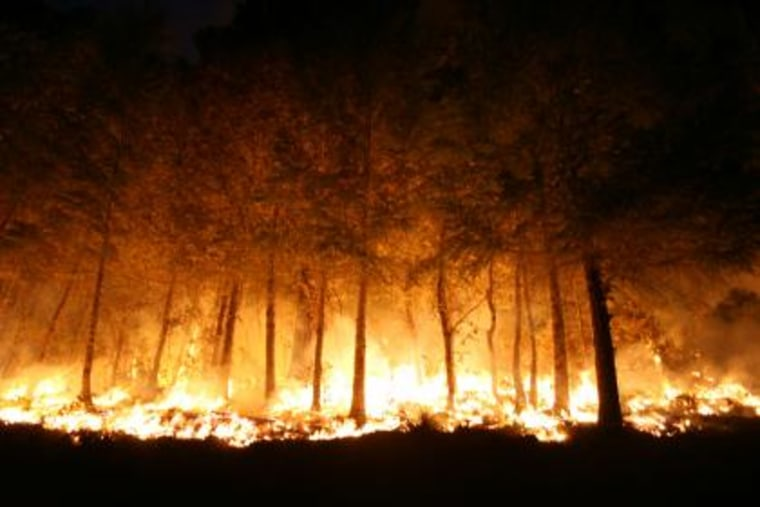 A stand of trees burns in the Siskiyou Wilderness area.