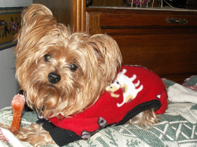Morgan, a Yorkshire terrier,jumped atowner PamelaPlante's leg so incessantly that she that she finally inspected it in the mirror, and realized it was red up to her knee. Shewas diagnosed withan infection thathad spread throughout her body and she spent a week in the hospital.