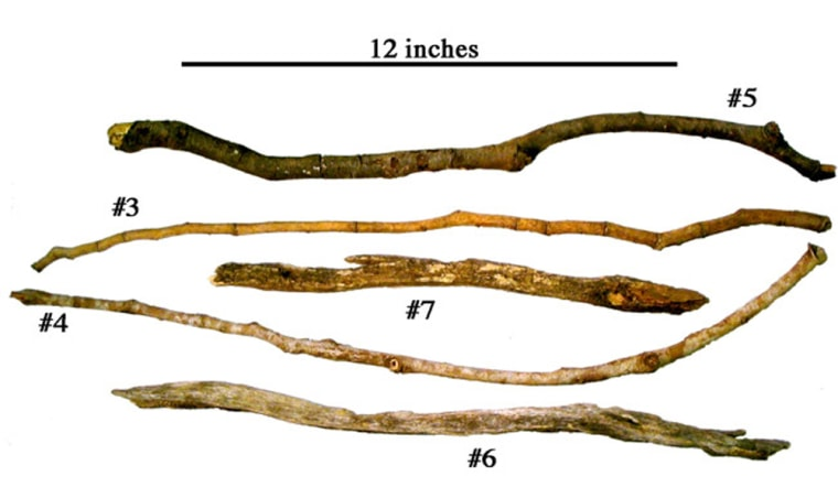 Sticks were uncovered in western Tanzania and respresent tools used by savanna chimpanzees to excavate underground food resources.