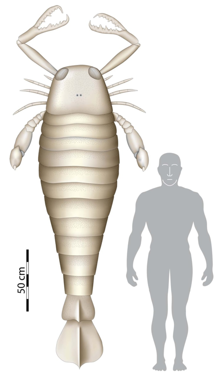 Image:  Computer generated image showing a size comparison between a human an ancient sea scorpion.