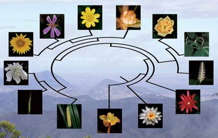 """The origin of flowering plants called angiosperms has long baffled scientists, with Charles Darwin famously referring to the plant puzzler as an """"abominable mystery."""""""
