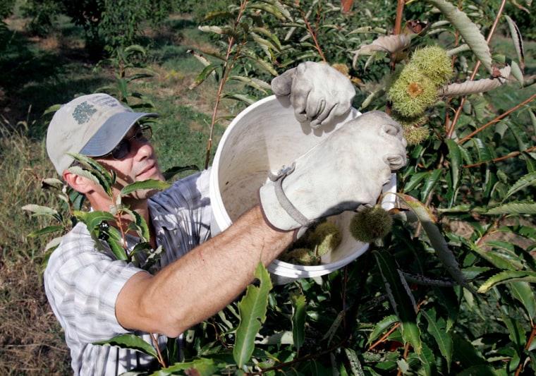 Image: Volunteer farm worker
