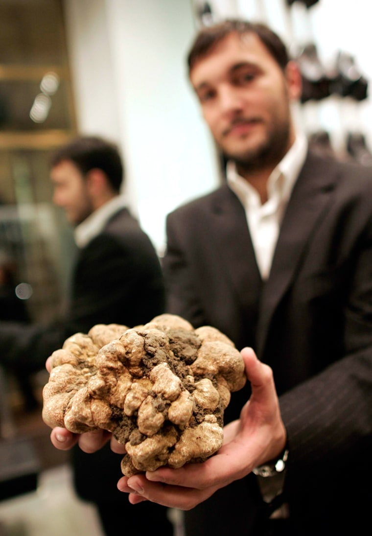 Image: Italian truffle hunter and trader Cristiano Savini holds a 1.5kg (3.3lb) white truffle of Tuscany in downtown Rome