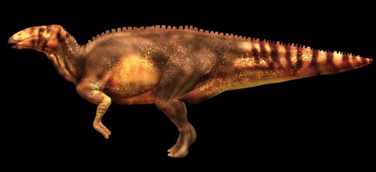 Image: The hadrosaur, nicknamed Dakota