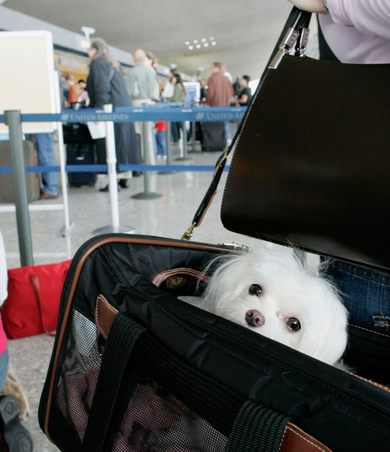 Image: A dog stands in line before flying to Indianapolis at Dulles International Airport