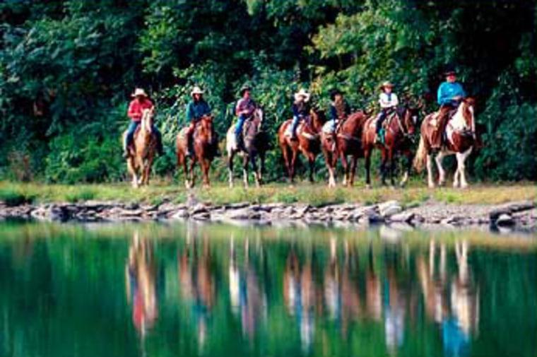 Image: Horses