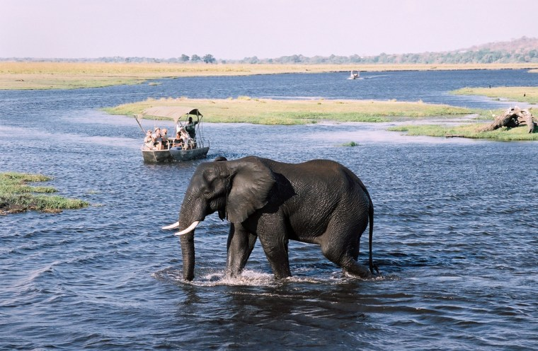 Tourists snap photos of an elephant crossingthe Chobe River, near Kasane, Botswana. With the , you get round-trip airfare, nine nights' lodging, most meals, and a safari exploring the amazing Okavango Delta, Chobe National Park in Botswana, and Victoria Falls in Zambia.