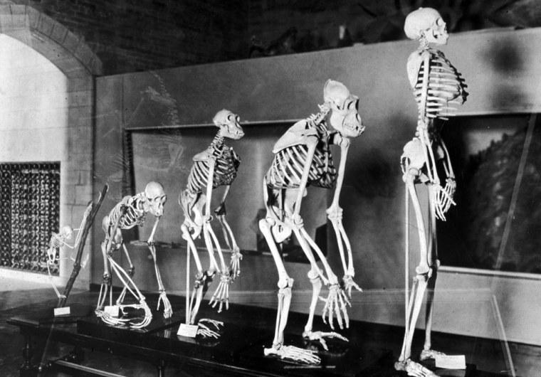 Image: Human Evolution