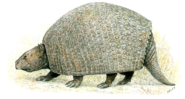 Artist's reconstruction of the primitive armadillo relative, P. septentrionalis, which likely weighed 200 pounds.