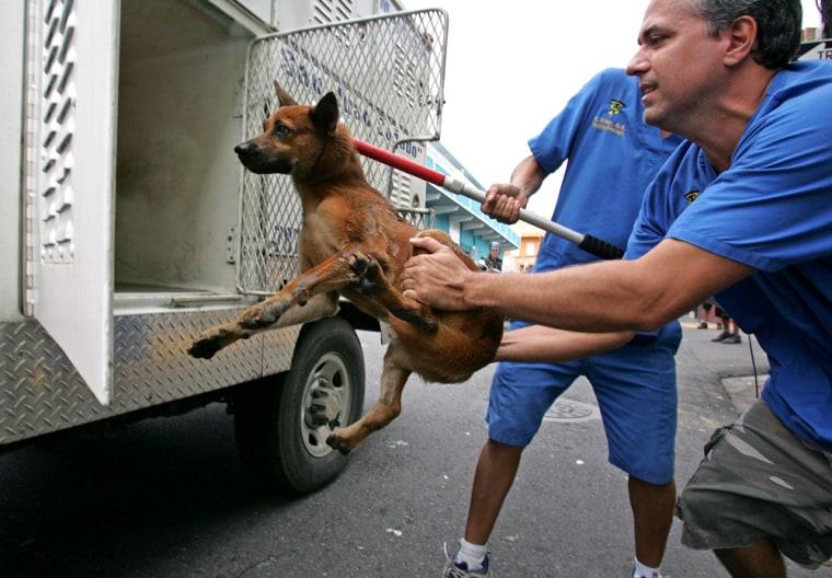 Image: Stray dog in Puerto Rico