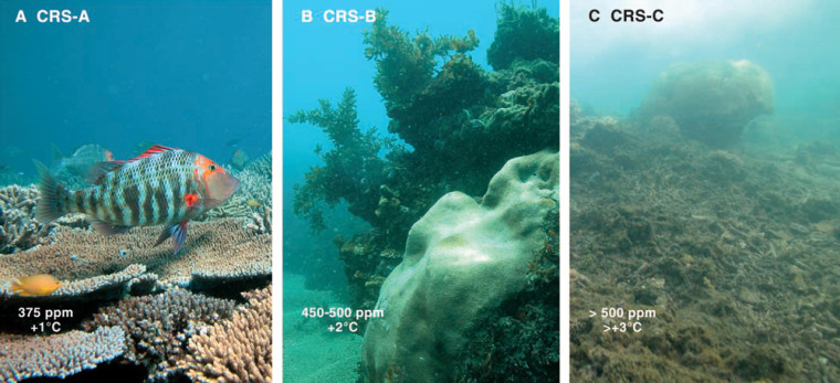 These images publishedwith a coral acidification study in the journal Science reflect scenarios of carbon dioxide's impact on reef ecosystems. The left image representsan intact system at current CO2levels; the center image shows coral decay with increased CO2; and the right imageshows a devastated system with even higher CO2 emissions.