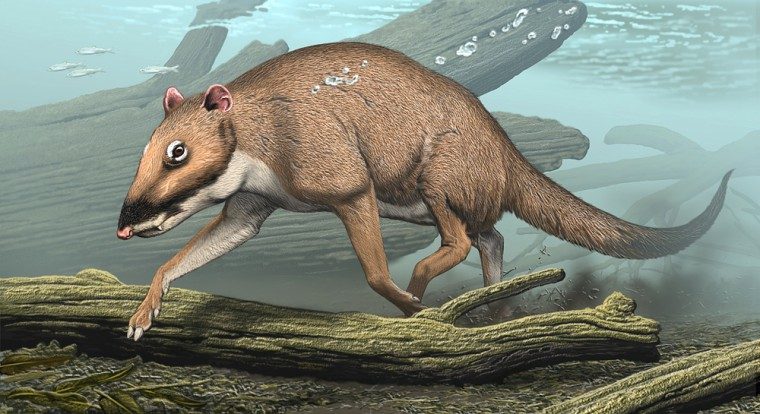 Image: The 48 million year old ungulate Indohyus from India