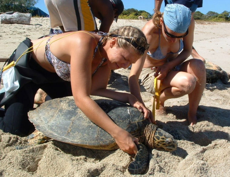 Image: volunteers help turtle