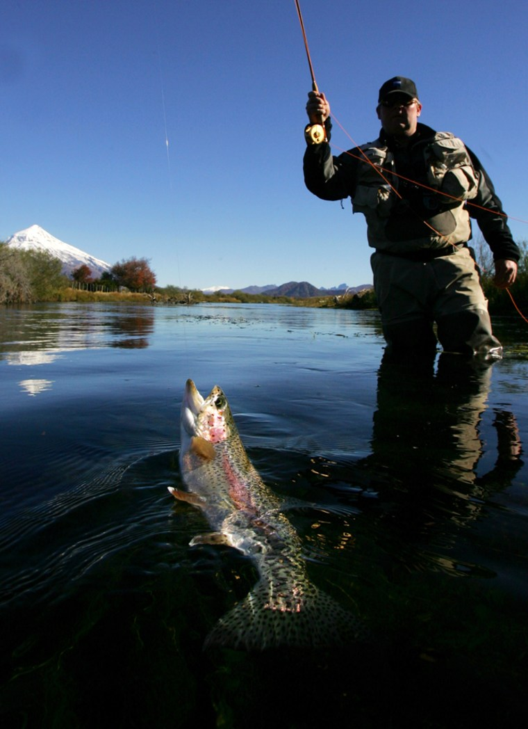 Image: Man catching trout
