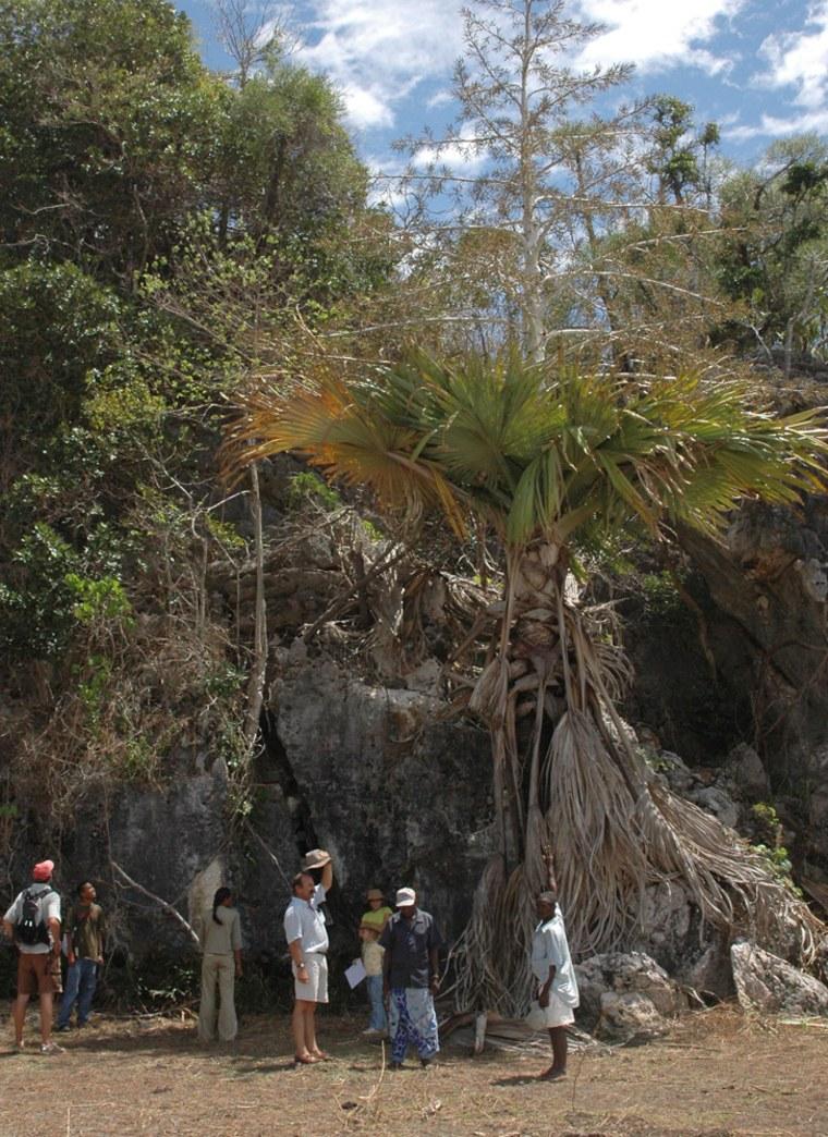 Image: Self-destructing palm tree