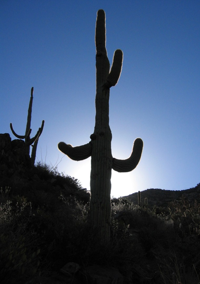 Image: Saguaro National Park, near Tucson, Ariz.