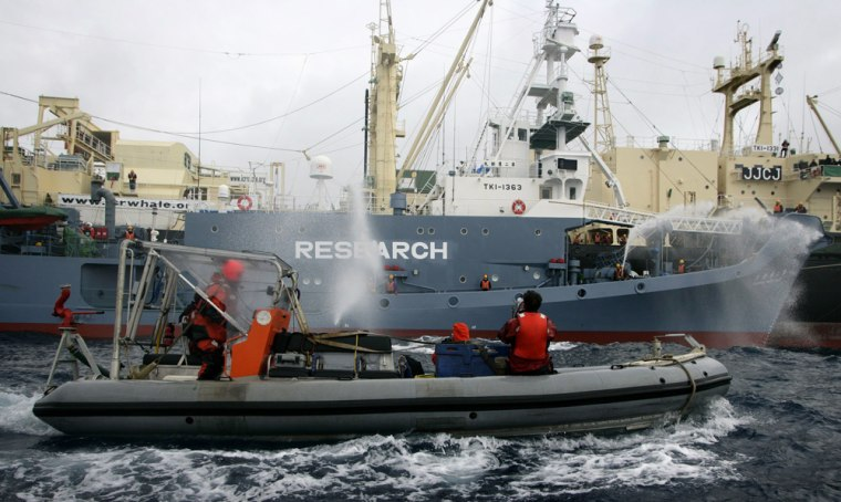 Image: A Greenpeace inflatable boat is seen next to Japan's whaling fleet