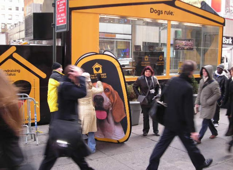 Pedigree's Adoption Drive is held during the Westminster Dog Show's two-day event in Madison Square Garden to help homeless pets around the country.