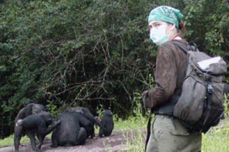 Image: Christophe Boesch, director of Chimpanzee Projects