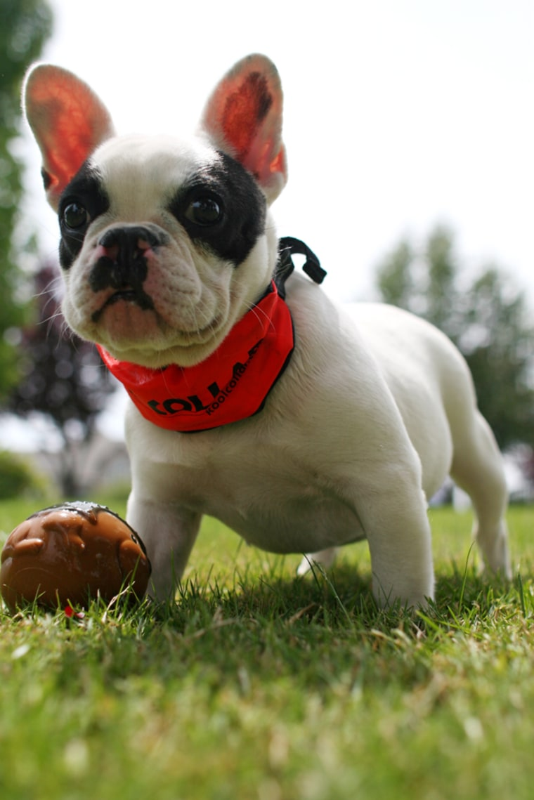 For pets that enjoy the great outdoors, the Kool Collarwill keep them comfortable in the hot sun.