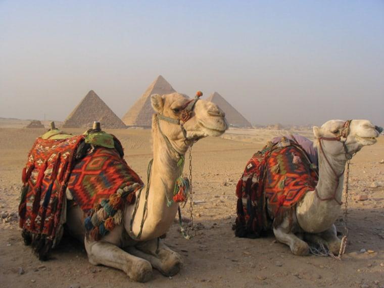 Image: camels
